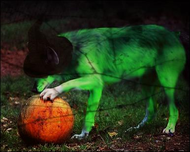 Existence Halloween by Spiritual-Dawn
