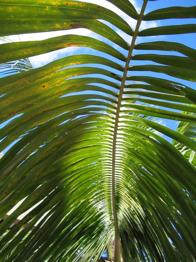 The Palm Tree by leidra