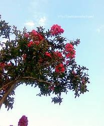 Flowers in the tree by Zoehi