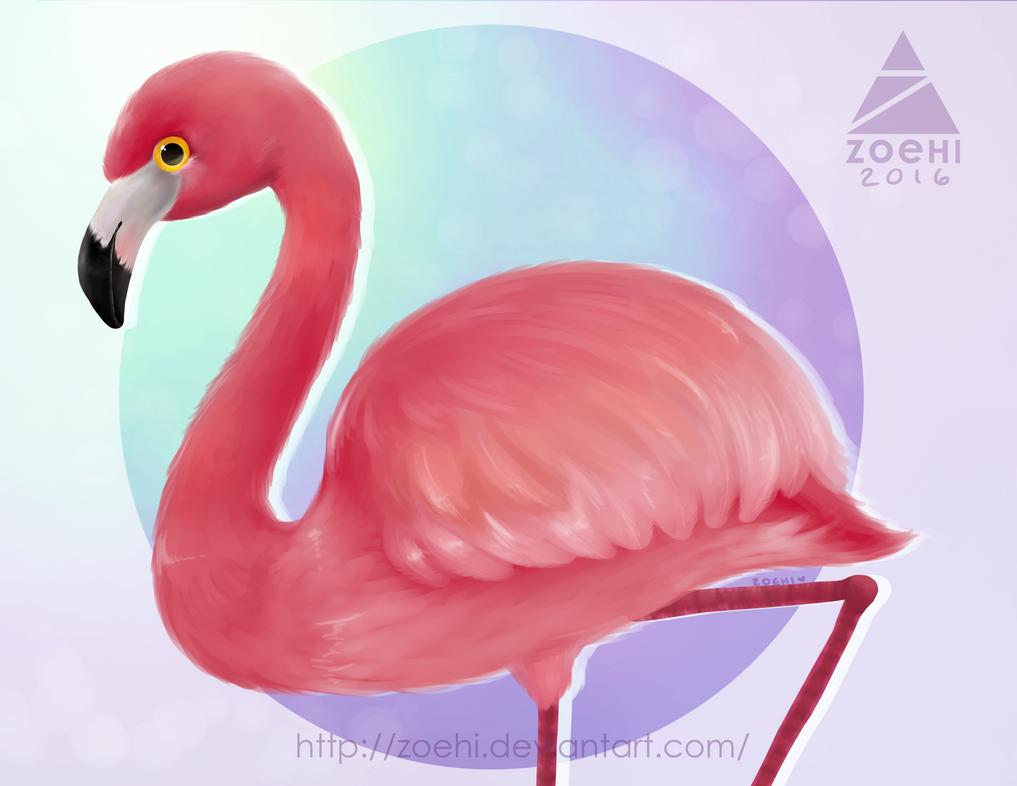 Flamingo by Zoehi
