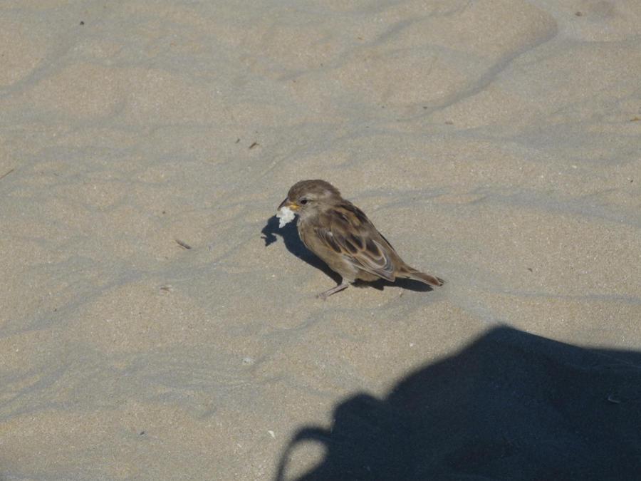 bird by kociarrra