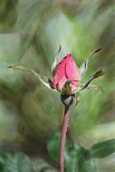 Rose Demo Digital Watercolor by HalfLifeComics
