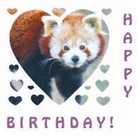 Happy Birthday Red Panda by MetalBeowulf89