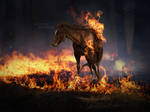 Tears of Flames