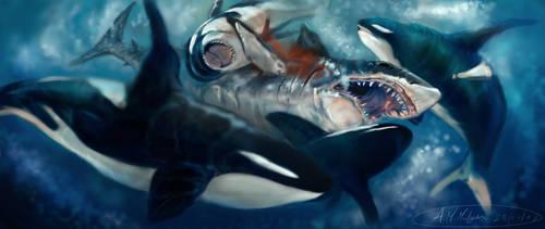 shark attacked
