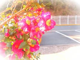 Hotter Pink Flowers by ICanSpellPotatoe