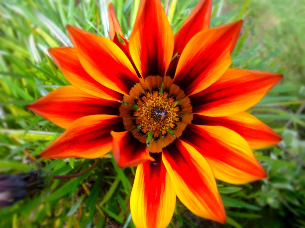 Red Orange Flower Name unknown sorry by ICanSpellPotatoe on DeviantArt
