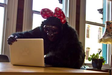 Drucilla Gorilla