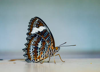 Butterfly with crazy eyes