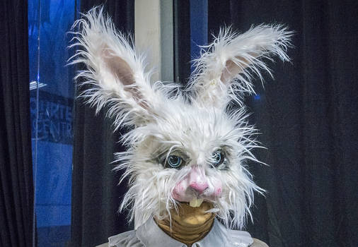 Scruffy Bunny