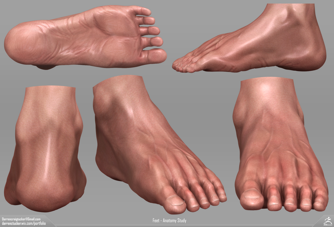 Feet - Anatomy Sculpt - ZBrush by DarrenTucker on DeviantArt