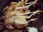 Naked chicks