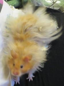 Schmo-Jo's Profile Picture