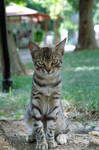 .lille kattepus