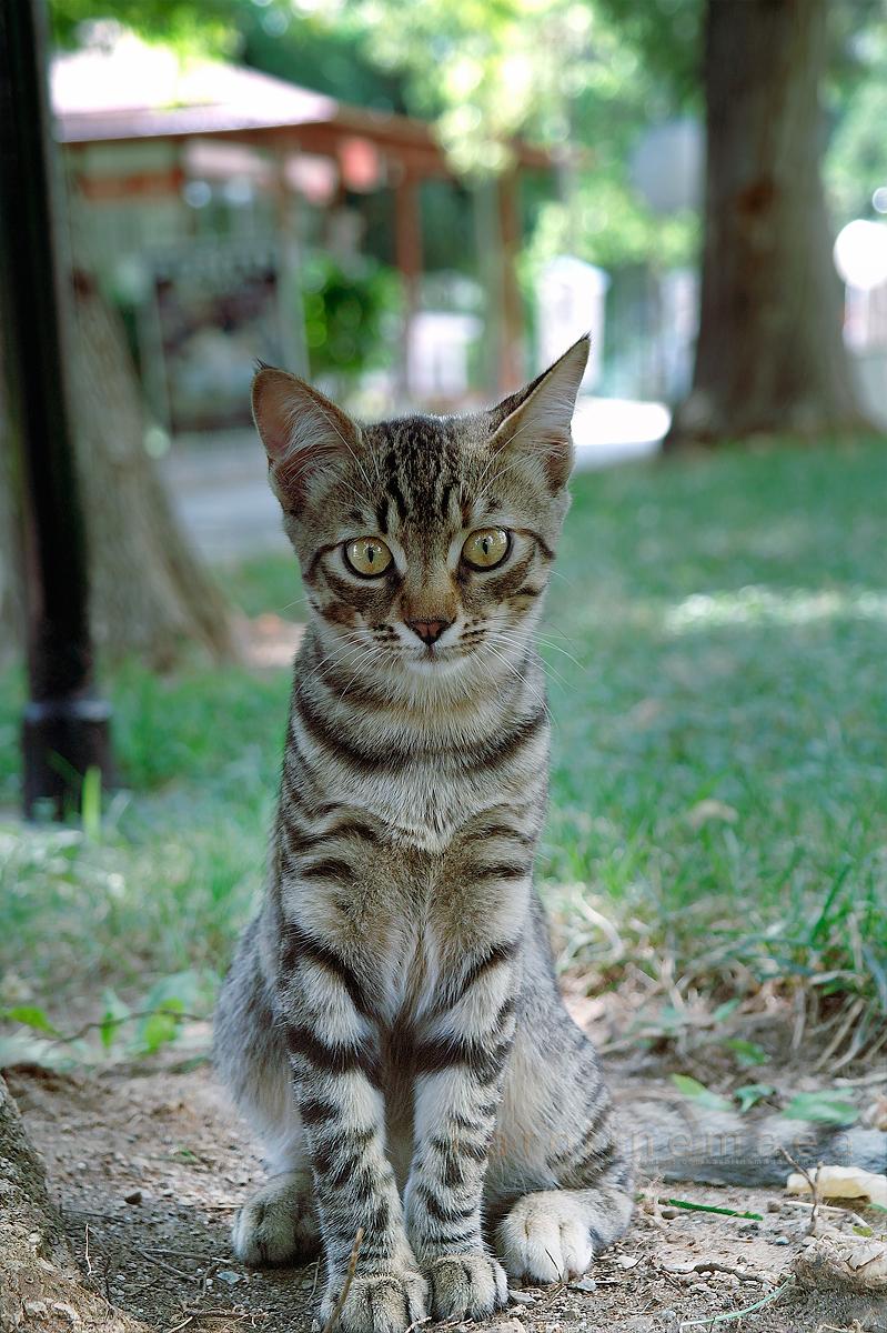 .lille kattepus by odelagt