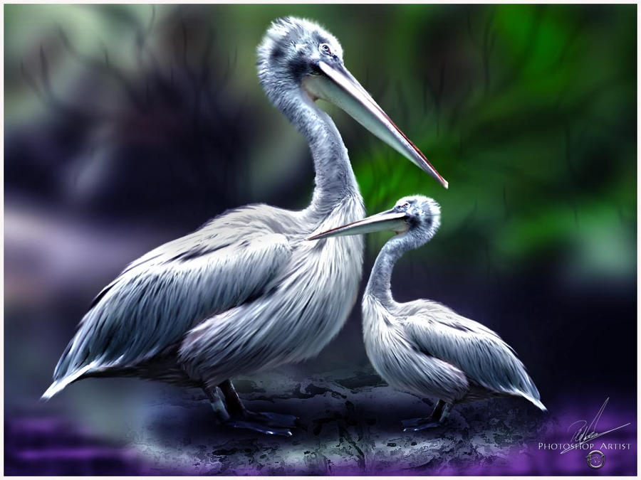 Pelikane by PEWOB