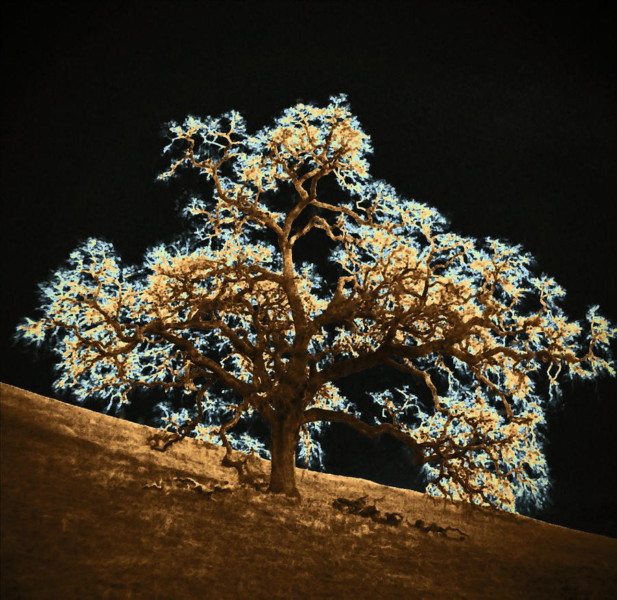 Čudno i usamljeno drveće - Page 4 Tree_of_life_by_angela4-d4nke56