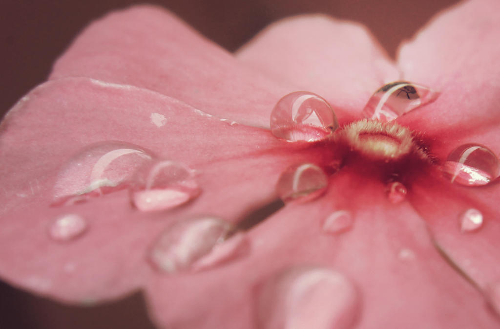 Drops on Flower by Grishnakh666