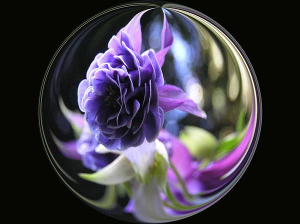 Ipad Wallpaper Little Plant In A Bubble: Bubble Flower Fish By DragonDew On DeviantArt