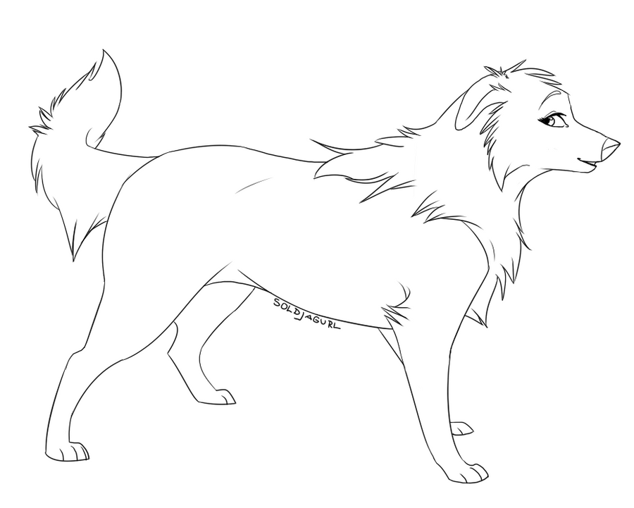 female border collie template by soldjagurl