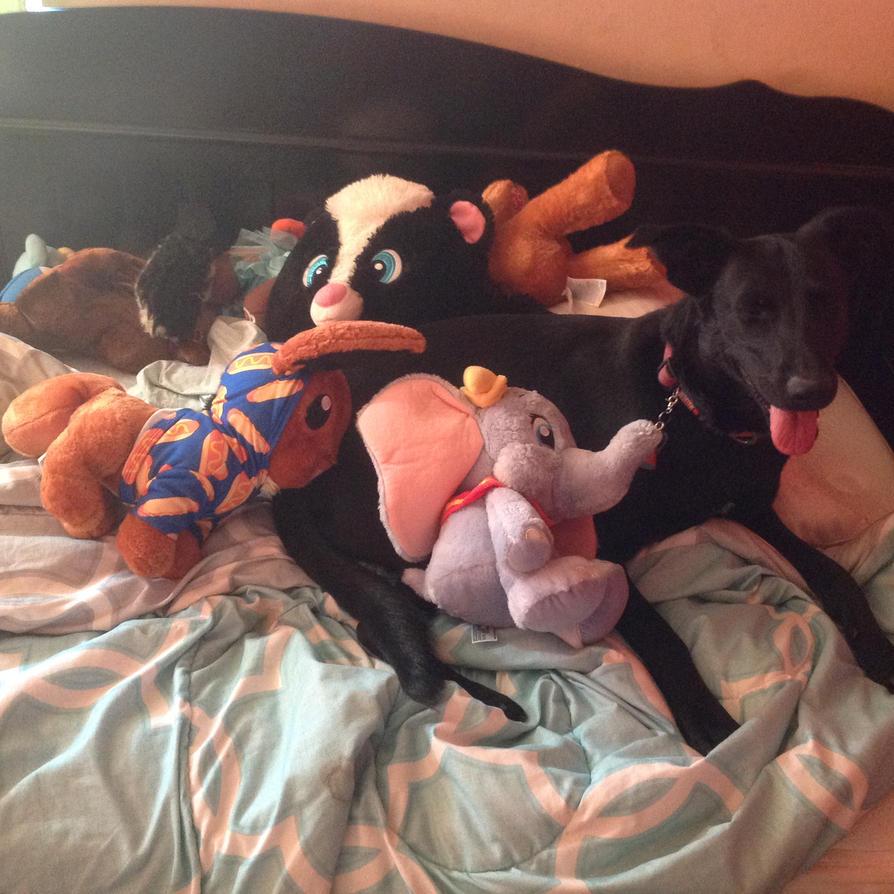 My stuffed animals and dog by AndyfoxReshiram03