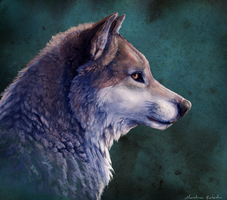 a wolf by Chilkat