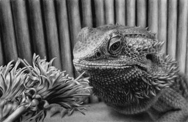 Bearded dragon with flowers