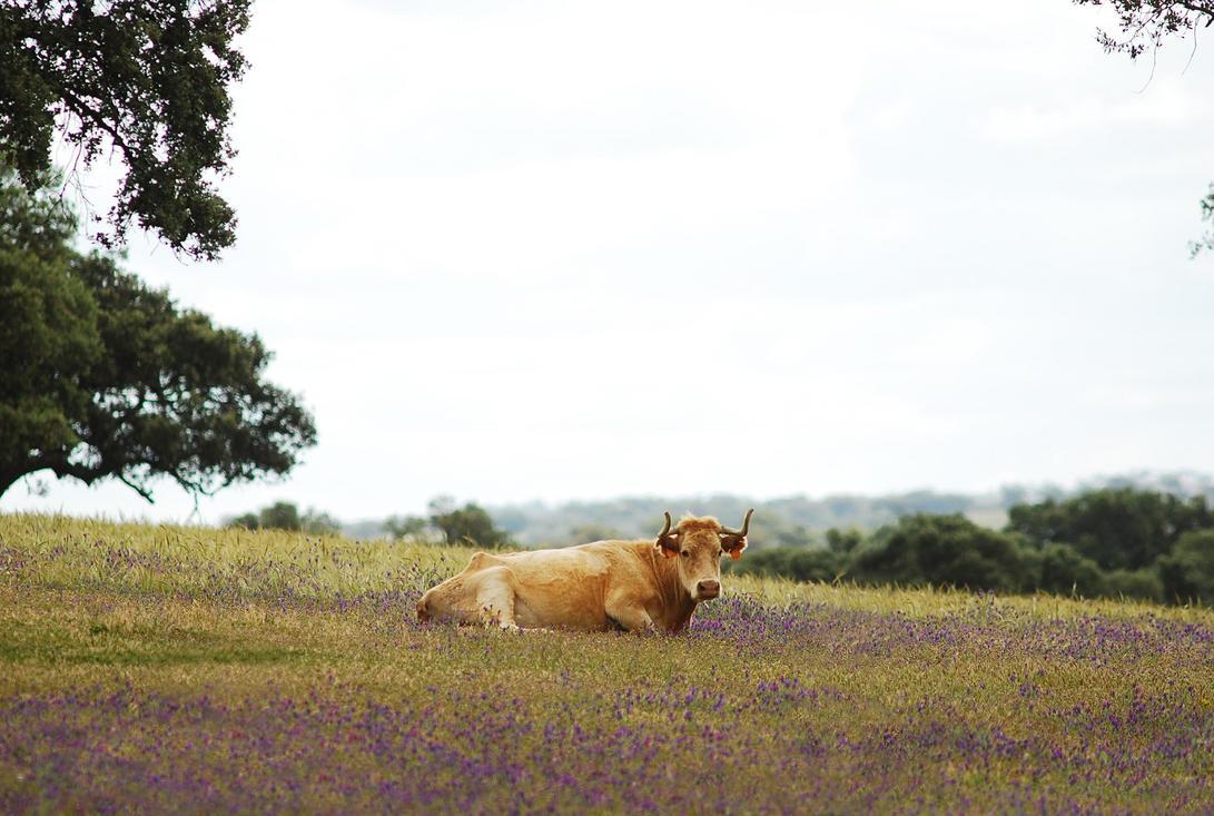 Purple Pastures by Modernmyth6277