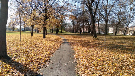Marquette Park Fall by 14RChico