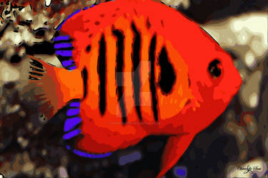 fire angelfish STAMPED