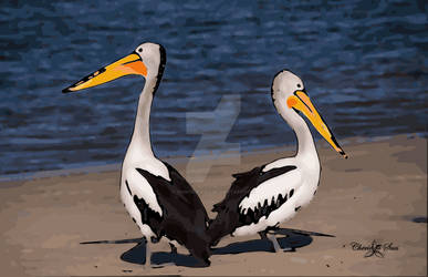 Two Beach Pelicans STAMPED