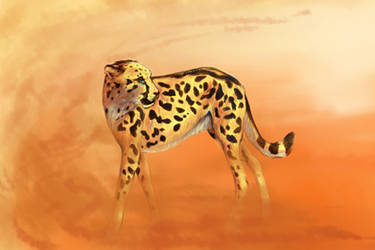 Helen the Cheetah