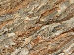 Bark of a tree texture