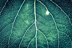 leaf by HCKPhotography