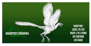 Archaeopteryx lithographica by BlueCea