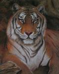 Tiger in Pastel