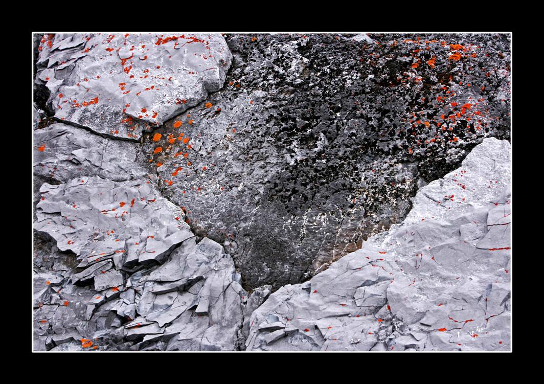 lichen 01 by hexC0DE