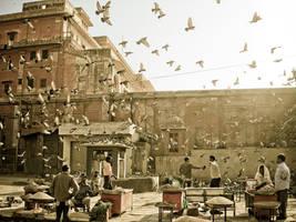 Birds by DimaBerkut