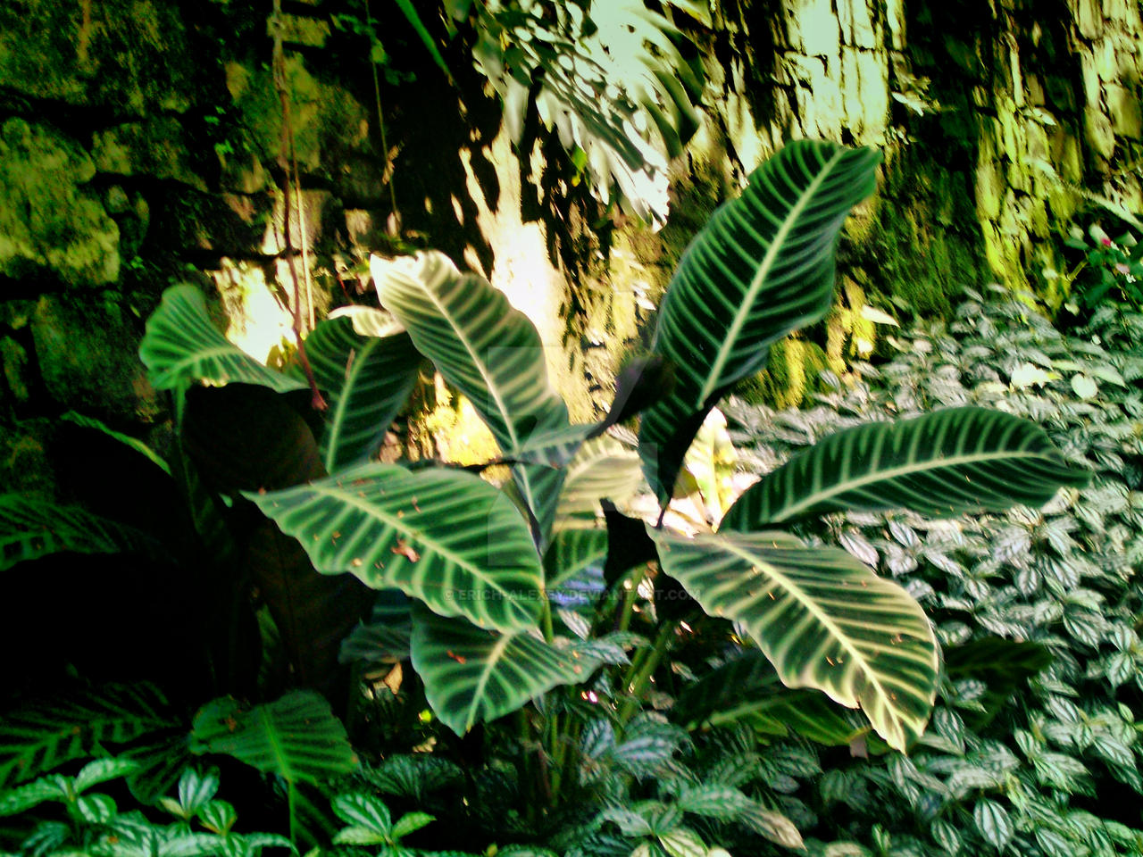 En el jardin de xilitla by erich alexey on deviantart for Jardin gally 78