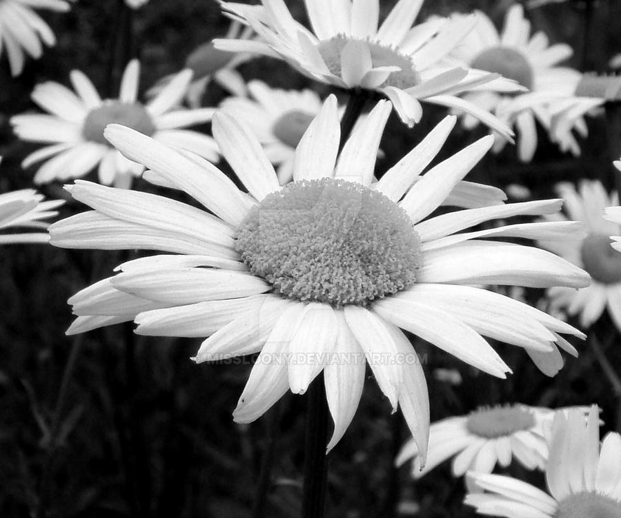 Daisy by MissLoony