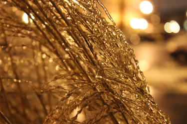 Day 1: Ice Covered Fern 2 by DarkPhoenix36