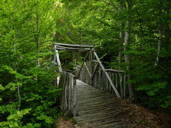 Bridge to nature by Alimba