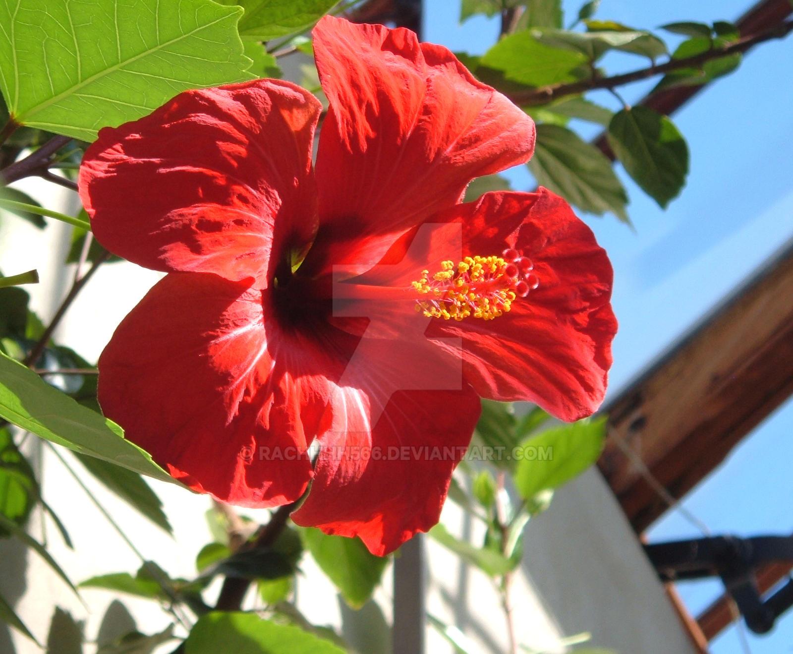 red tropical flower  flower, Beautiful flower
