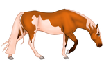 A5438 Remuda's Lioness of Brittany