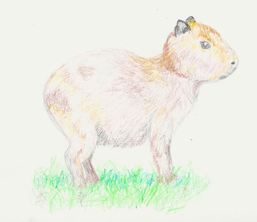 Capybara by pumkinhero