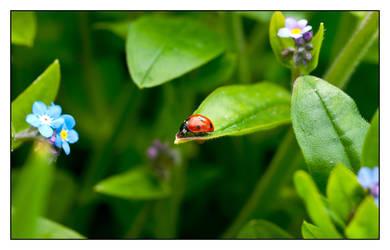 Ladybug by Frostola