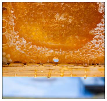 Honeydrip by Frostola