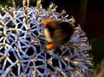 Fast Bumble-Bee