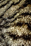 Cat Fur Iphone Wallpaper