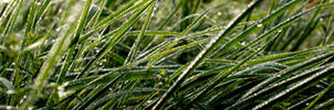Morning Dew by ViperHost